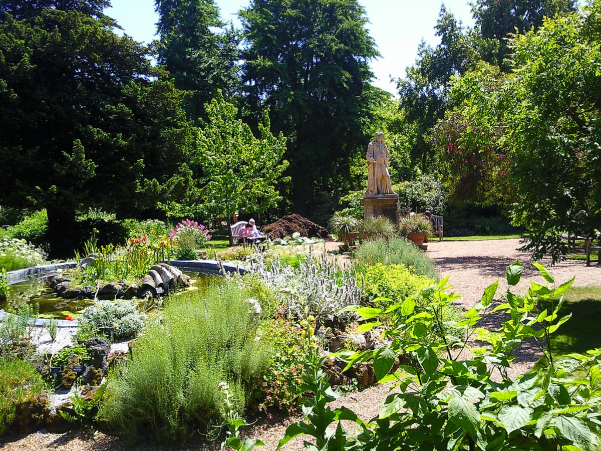 A section of Chelsea Physic Garden