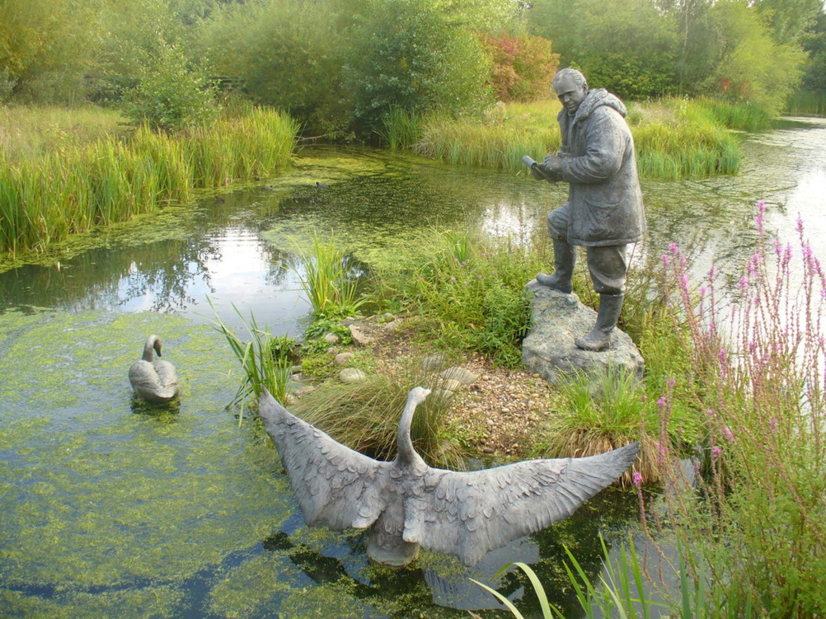 A statue of Sir Peter Scott, the naturalist, at the London Wetland Centre