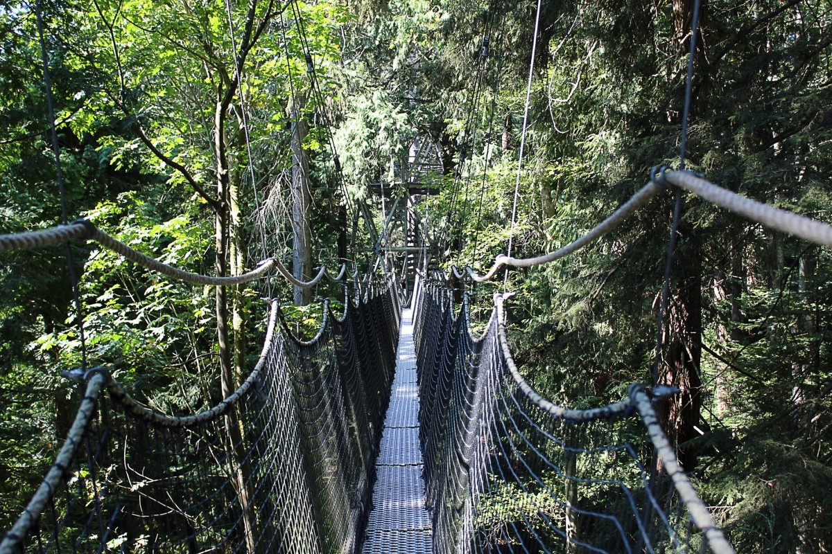 A suspended walkway in the tree canopy