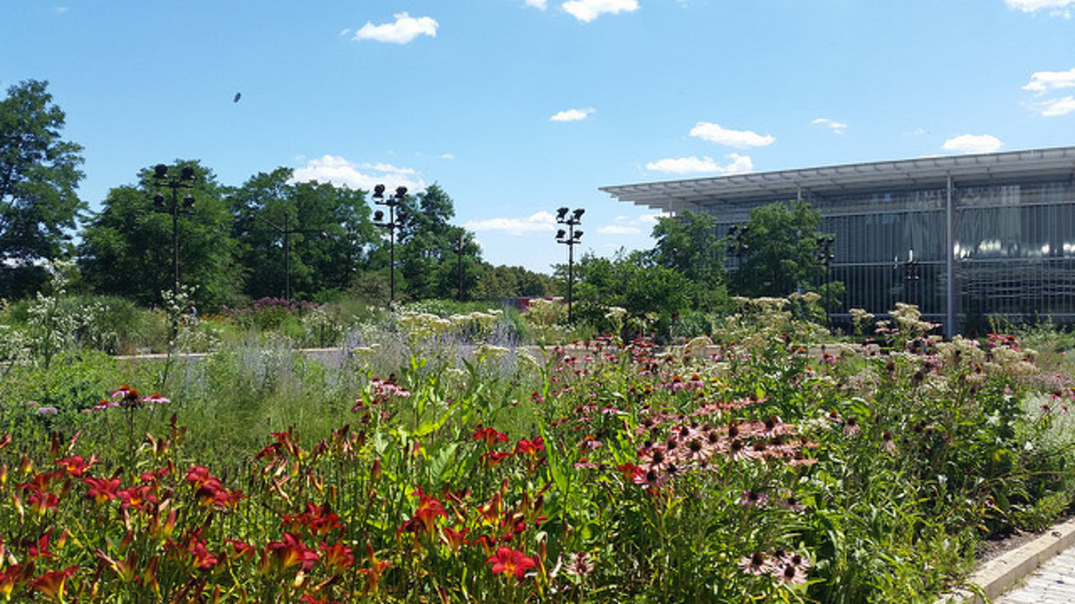 Late summer garden with red daylilies and purple coneflower.  Art Institute modern wing in the background.