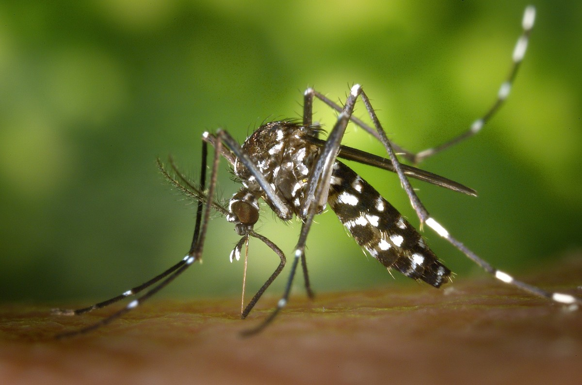 """You're most-likely to get bit by mosquitoes during the """"wet season"""" in Bali, which is October-April. Be especially careful during these months, and any time when you're near stagnant water where mosquitoes like to roam."""