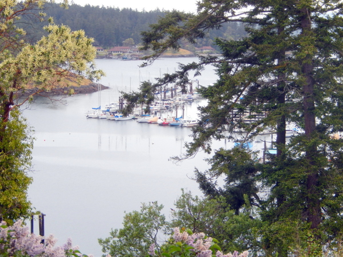 Boats docked in the Friday Harbor Marina as seen through the trees from the hillside above.