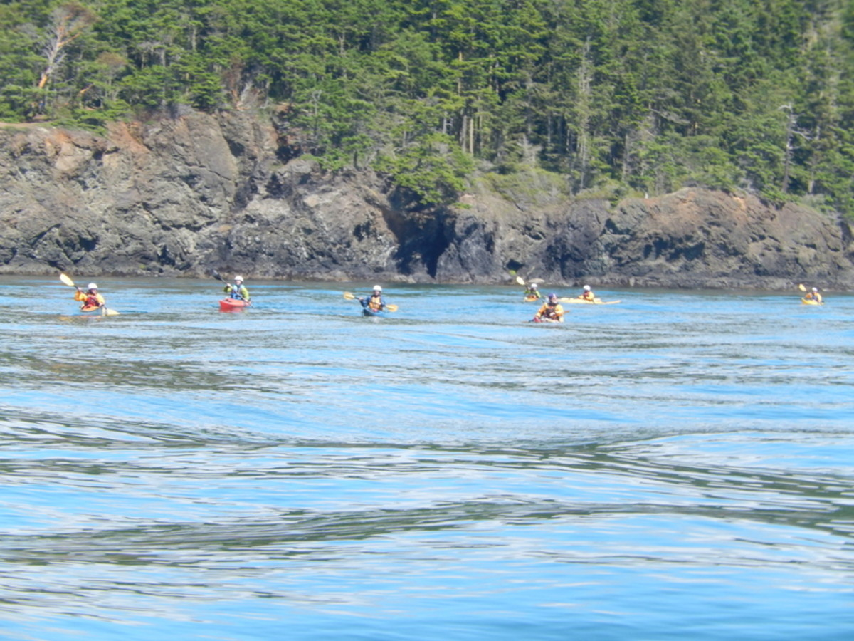 A group of kayakers off the wooded shore of an island enjoy paddling in the turbulent wake of passing boats. Remember kayakers have right of way over power boats.