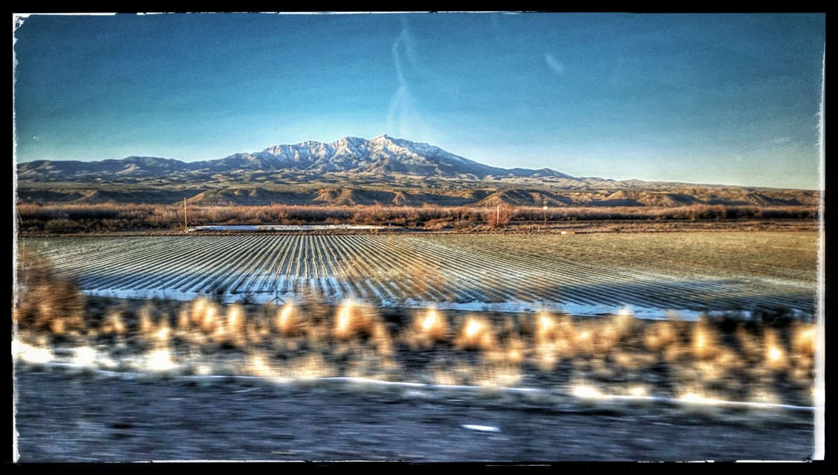 Cotton Fields with Mount Graham in the distance