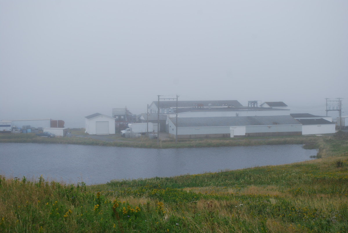 Fish plant on the beach, on a foggy day in St. Mary's, Newfoundland and Labrador