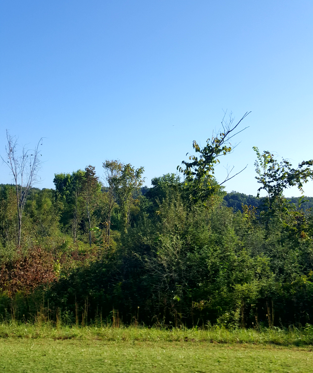 A view of the beautiful landscape at Salt Fork State Park.