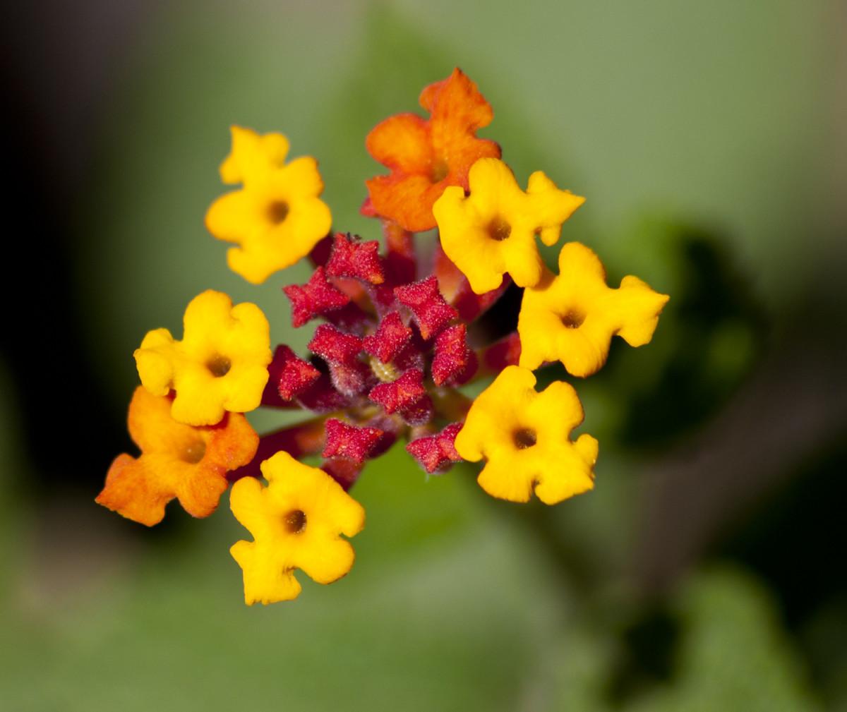 Tiny Flowers on Weeds