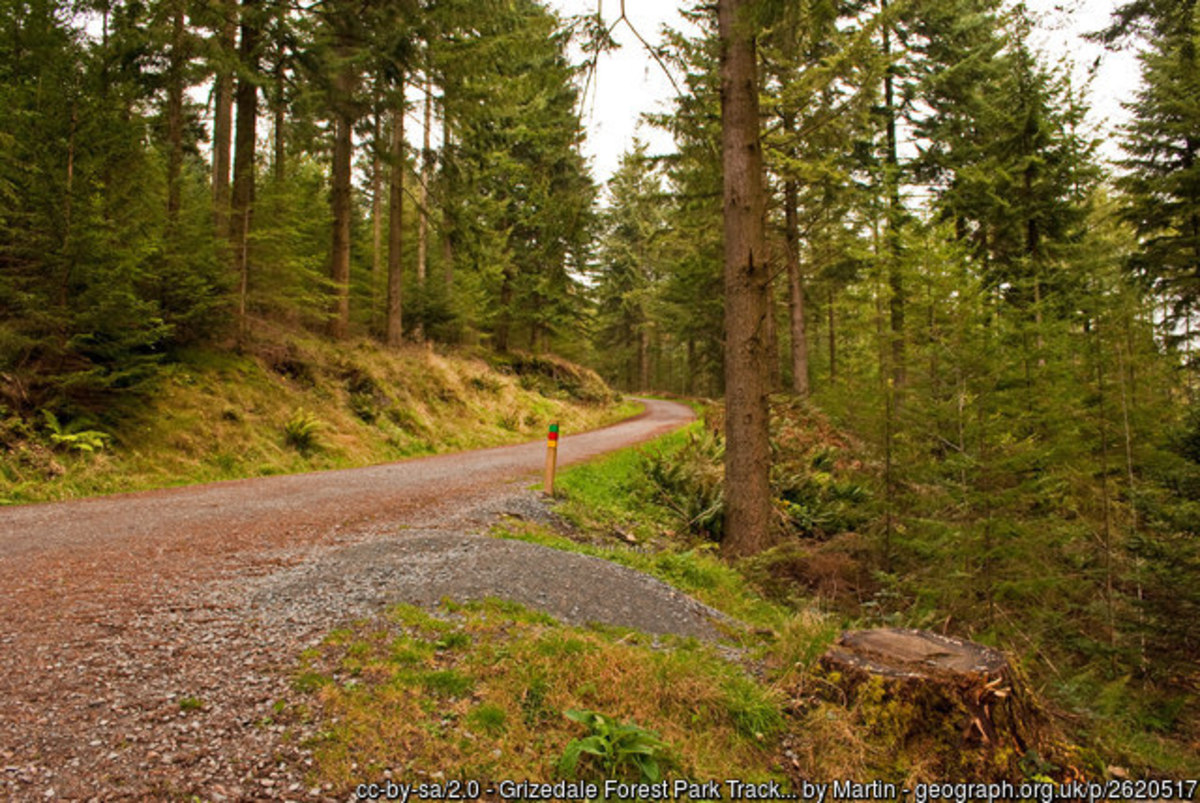Grizdale Forest, Southern Lake District, Cumbria