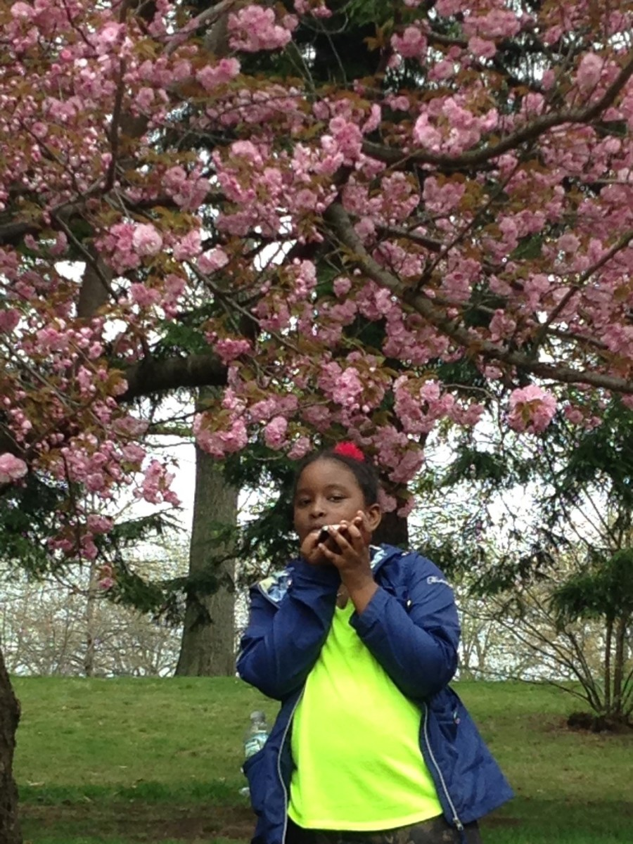 Brooklyn Botanical Cherry Blossoms will inspire your kids to stop and smell the flowers in the middle of the concrete jungle that is New York City.