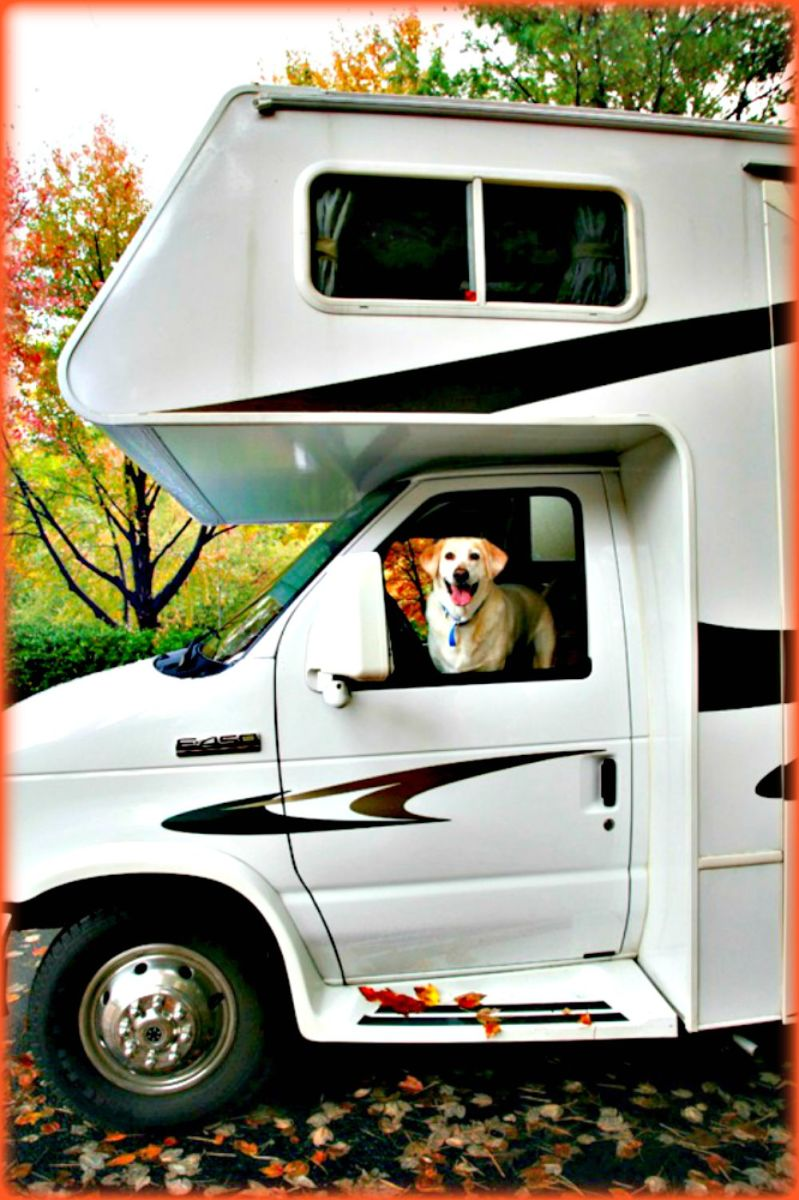 It's important to find out whether a campground allows pets, if they charge extra for this and if pets can only stay in certain areas.