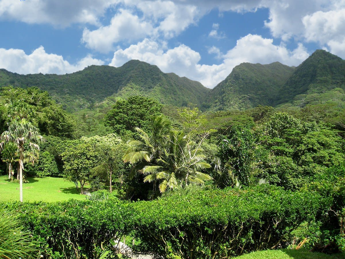 A rainforest, less than half an hour drive from Honolulu.