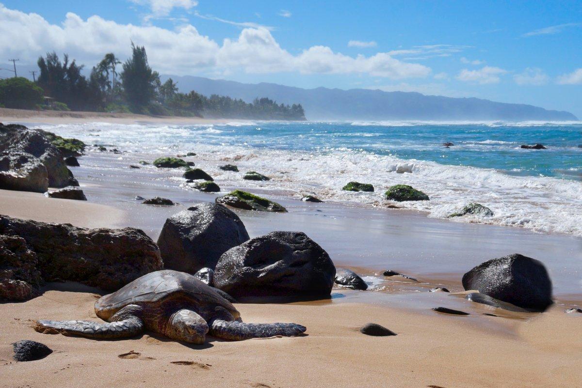 Laniakea Beach, also known as Turtle Beach.