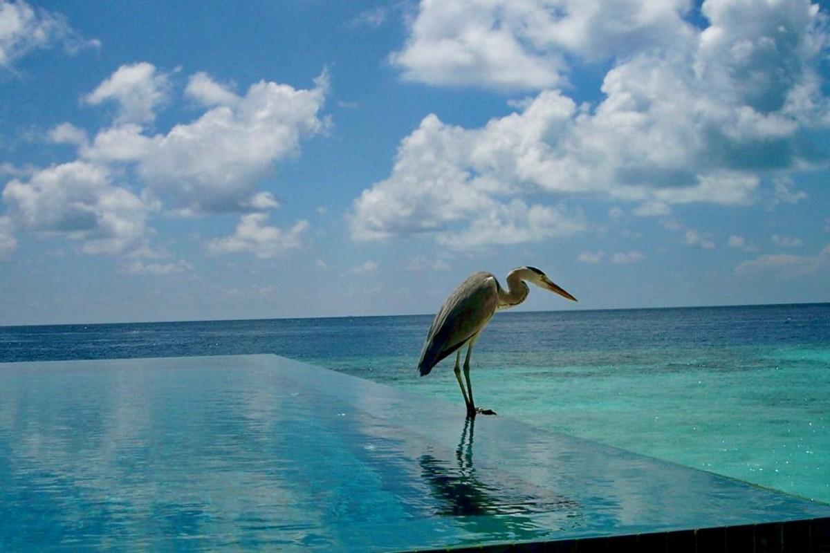 Пейзажный бассейн на курорте на Мальдивах
