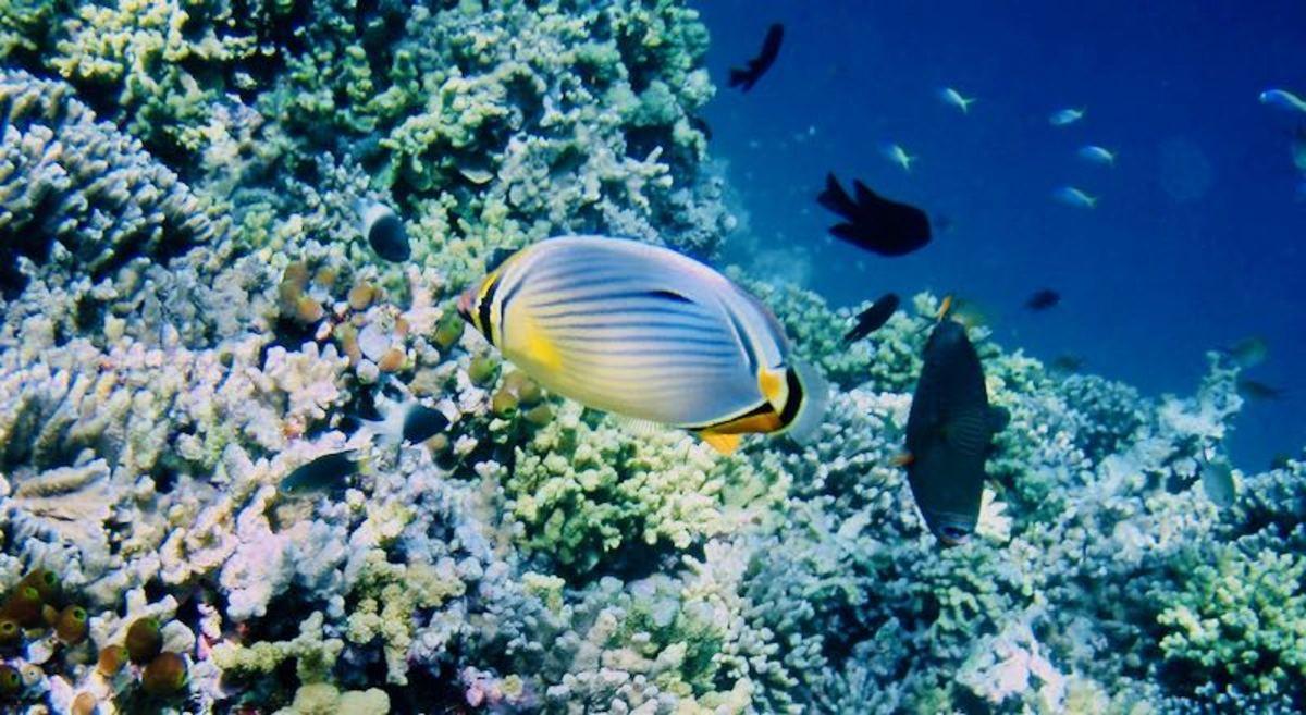 Рыба на Мальдивах