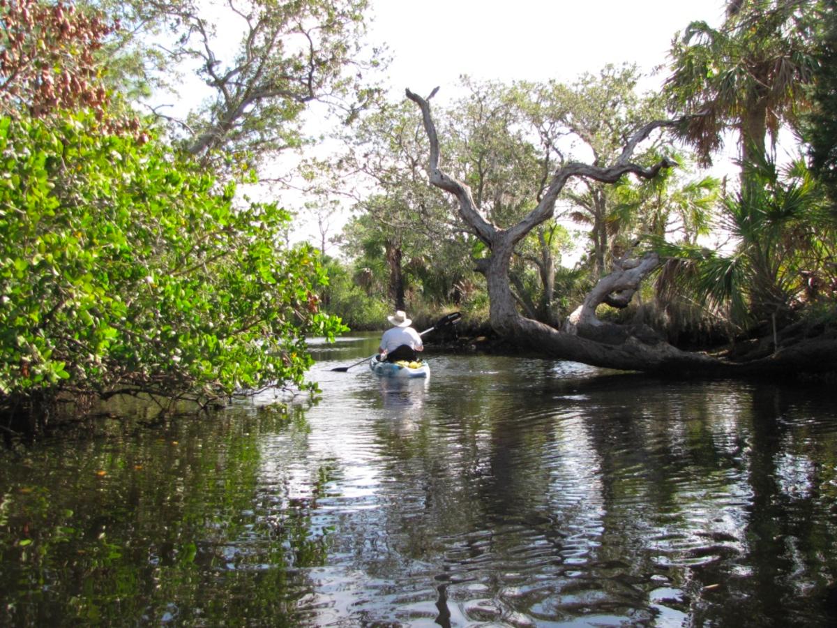 florida-kayaking-werner-boyce-salt-springs-state-park