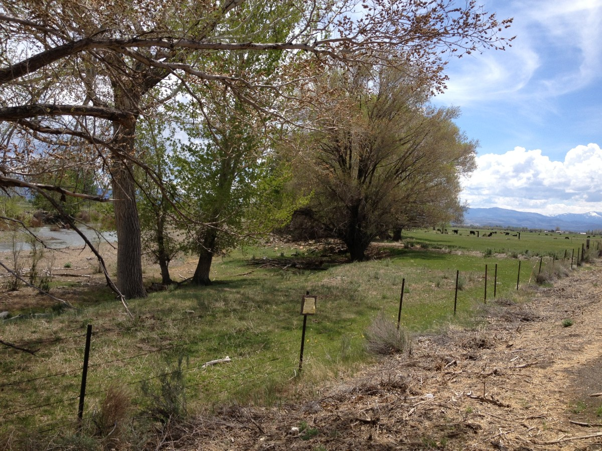 Spring In Carson Valley