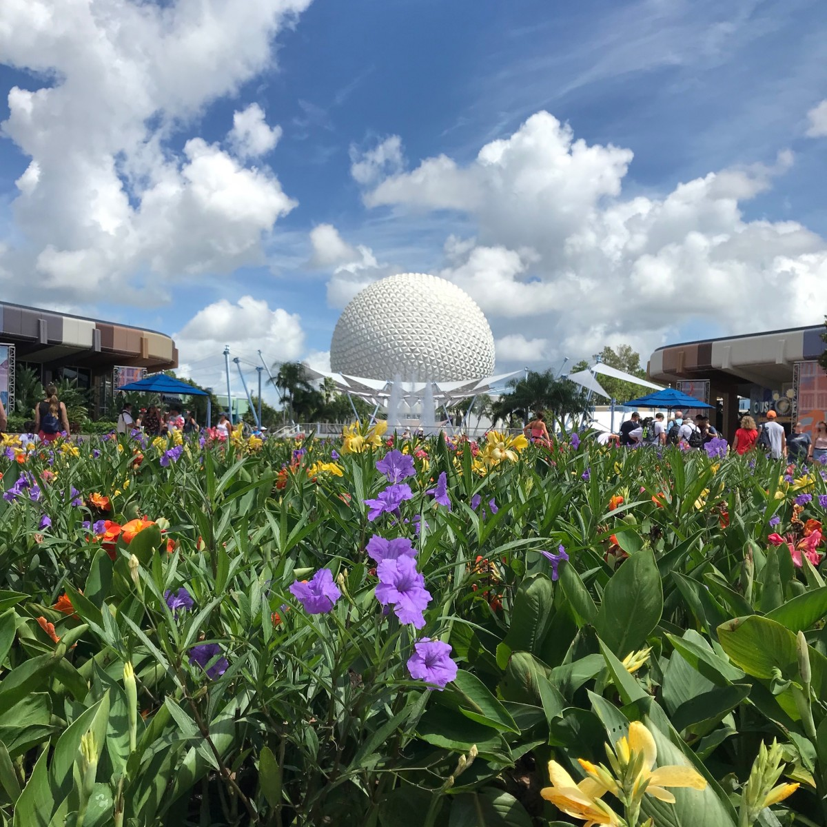The flowers at Epcot were stunning.