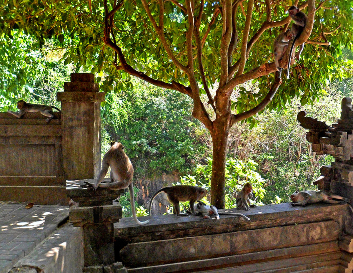 Macaque monkeys can be seen throughout the temple. (How many monkeys you see in this photo?)