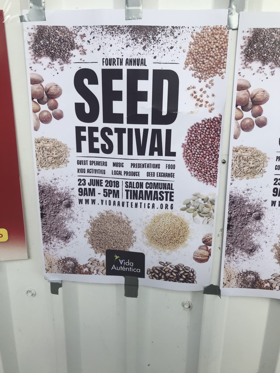 Local Festival I Stumbled Upon—Seed Festival, Costa Rica