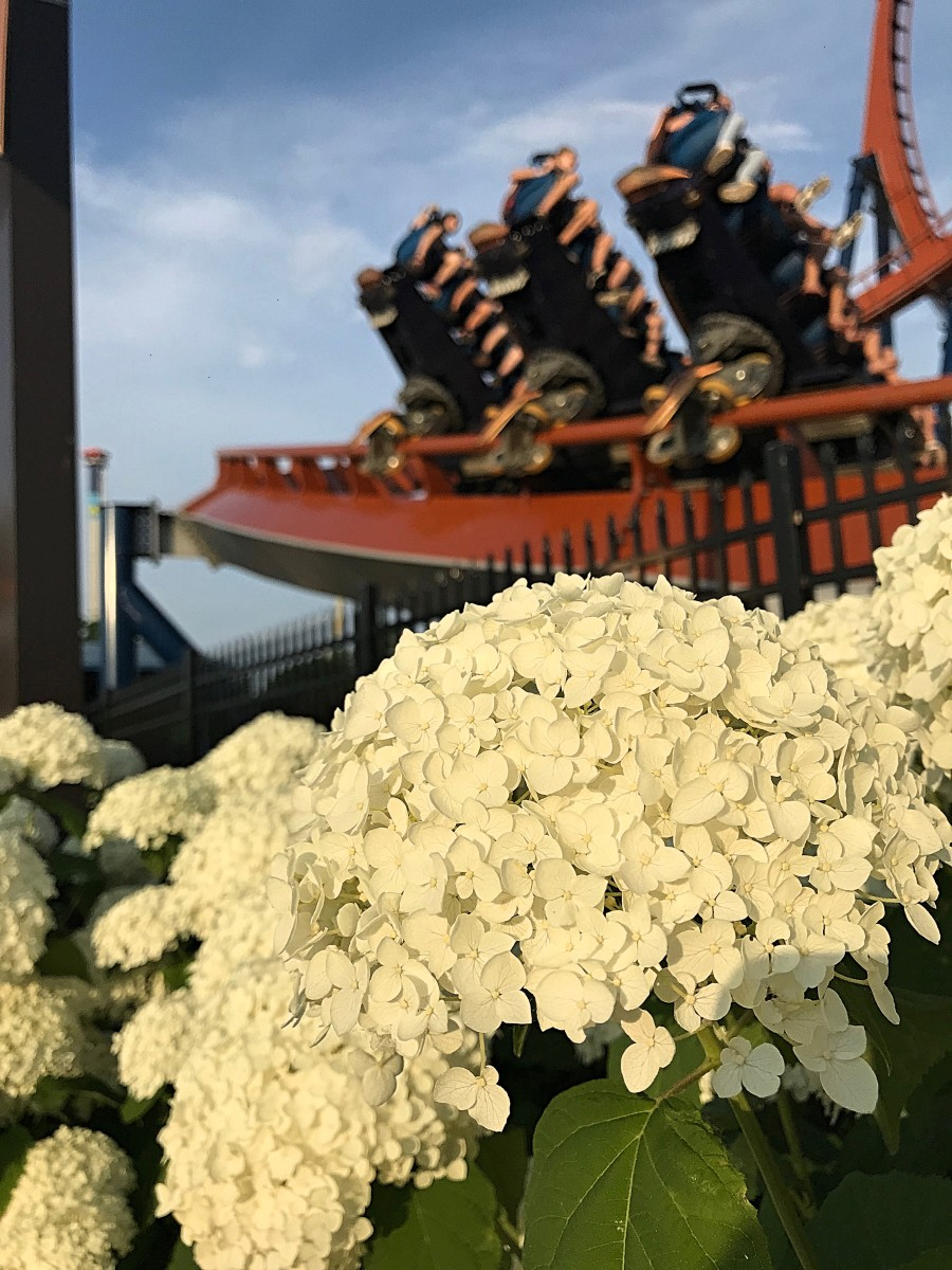 Don't forget to check out all of the incredible flowers around the park!
