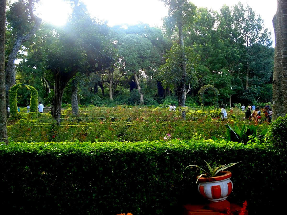 Rose Garden, Yercaud