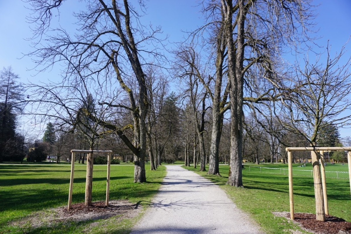 A pathway in the park.