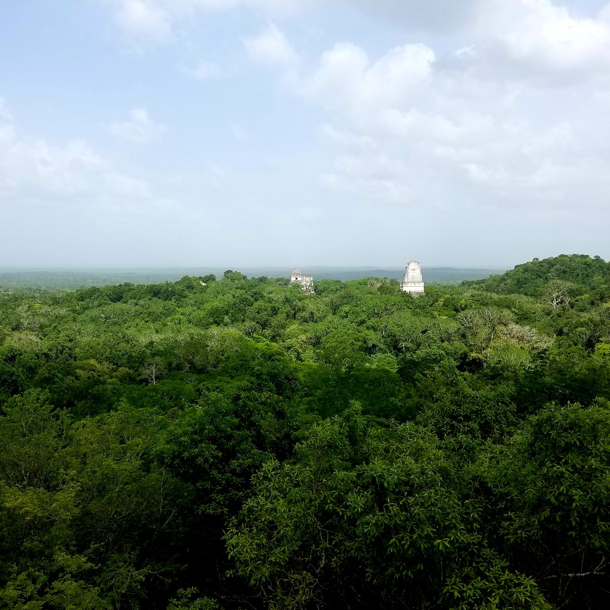 The various temples peeking out through the jungle. Absolutely breathtaking view from atop the tallest temple.
