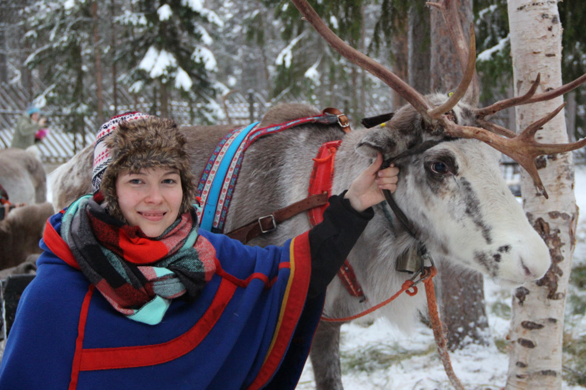 A woman in traditional Sámi dress tending to a reindeer.