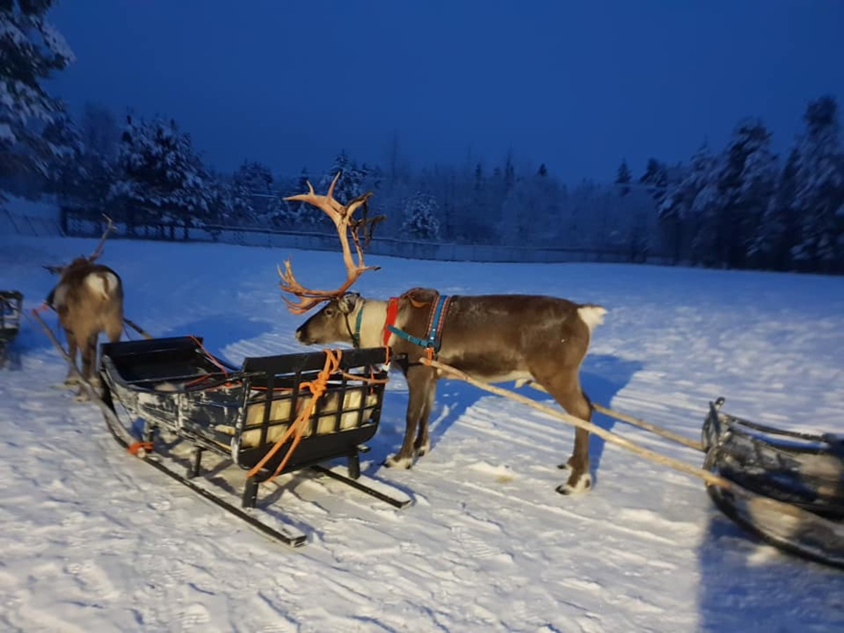 Reindeer and sleigh.