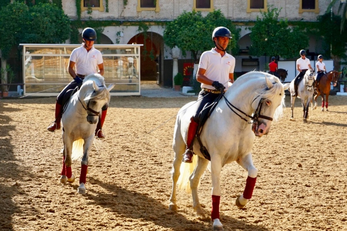 visiting-the-royal-stables-and-andalusian-horses-of-crdoba