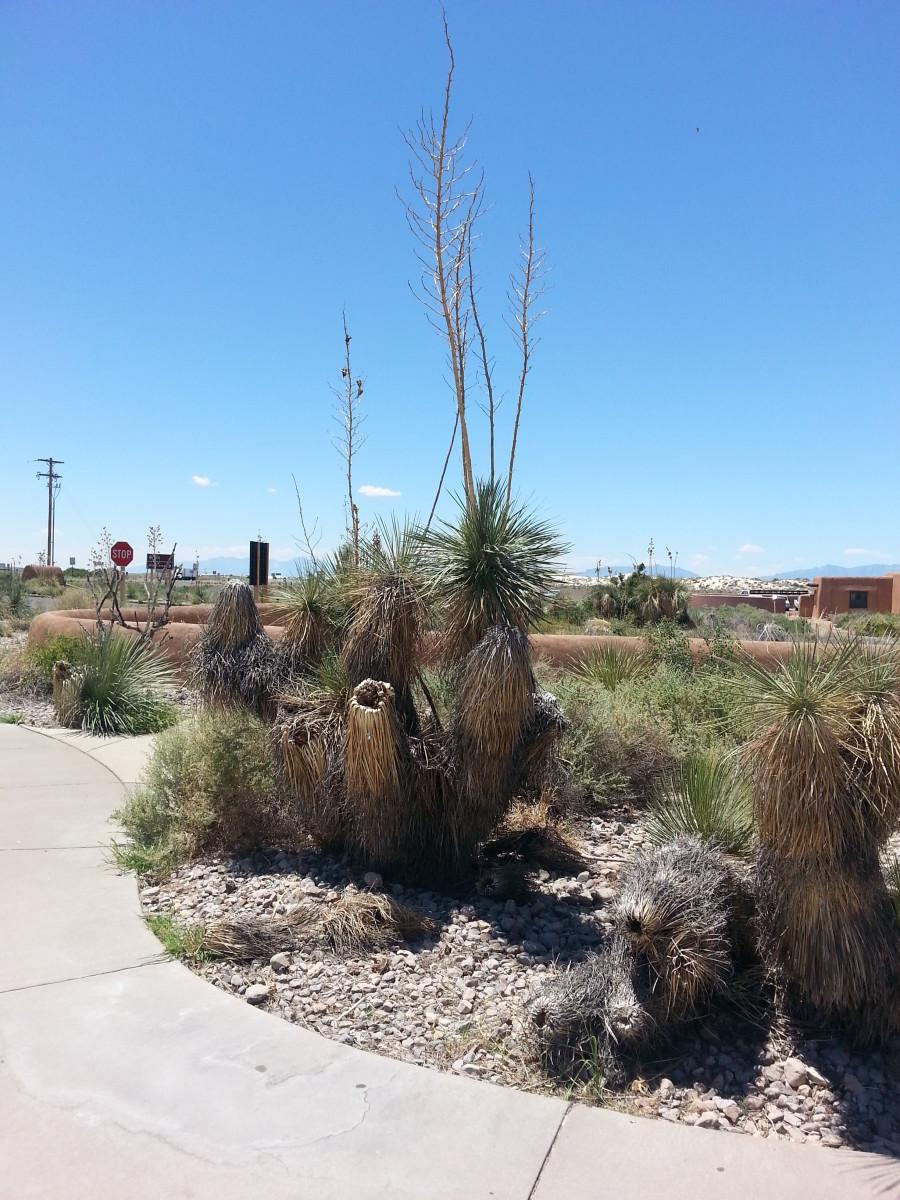 Desert vegetation