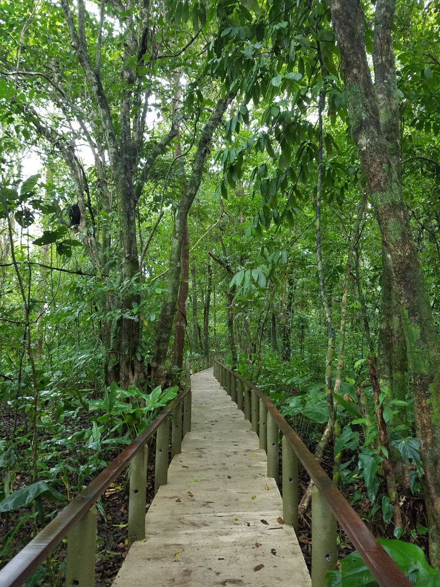 Nature Path At Lodge