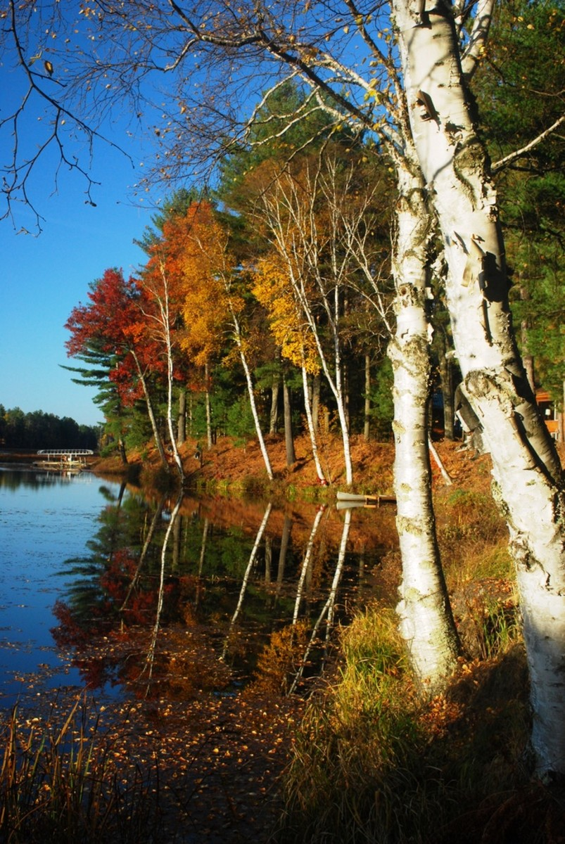 Fall colors on the Wisconsin River in Eagle River, Wisconsin