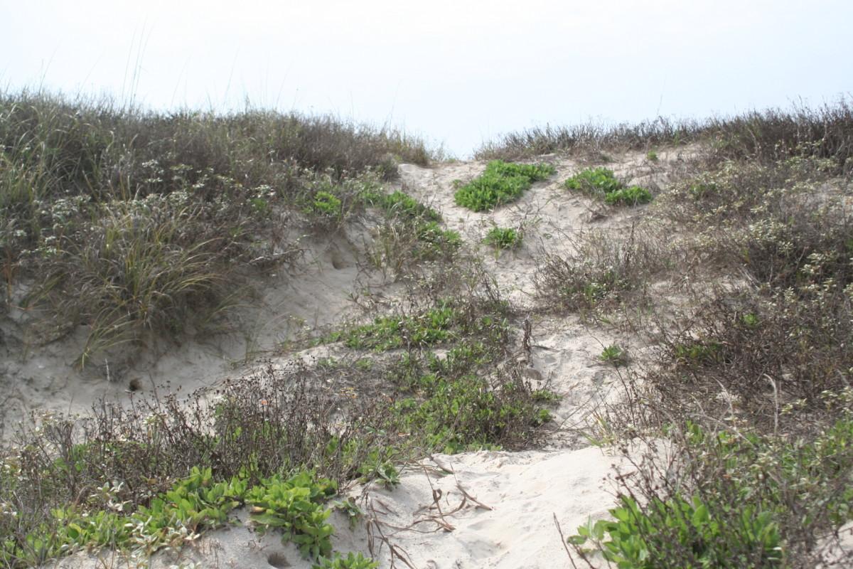 Trail through the dunes