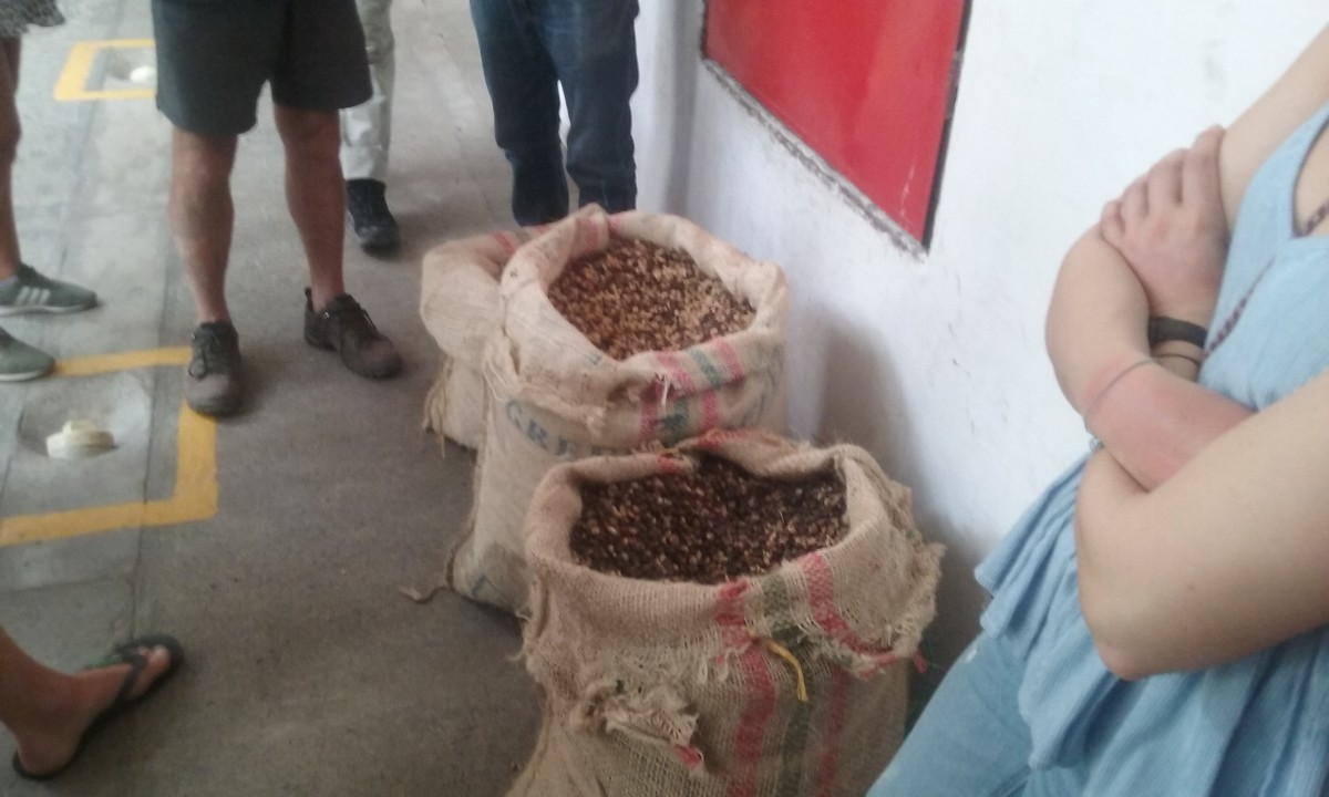 Coffee Bags Full of Beans