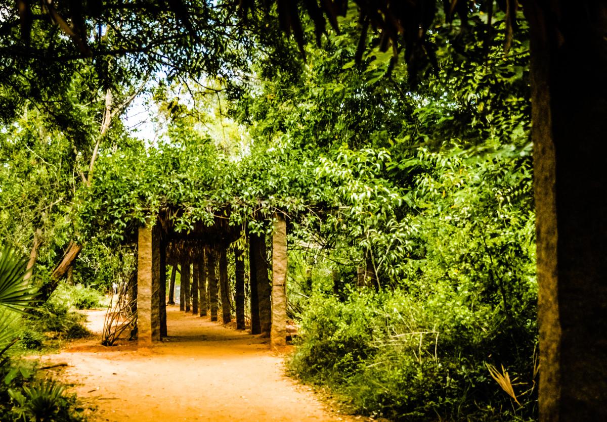 Auroville Botanical Gardens