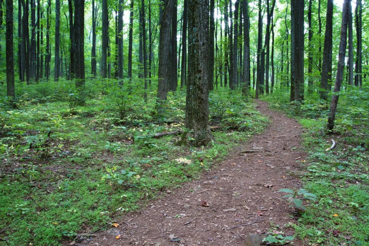 Dickey Ridge in Shenandoah National Park