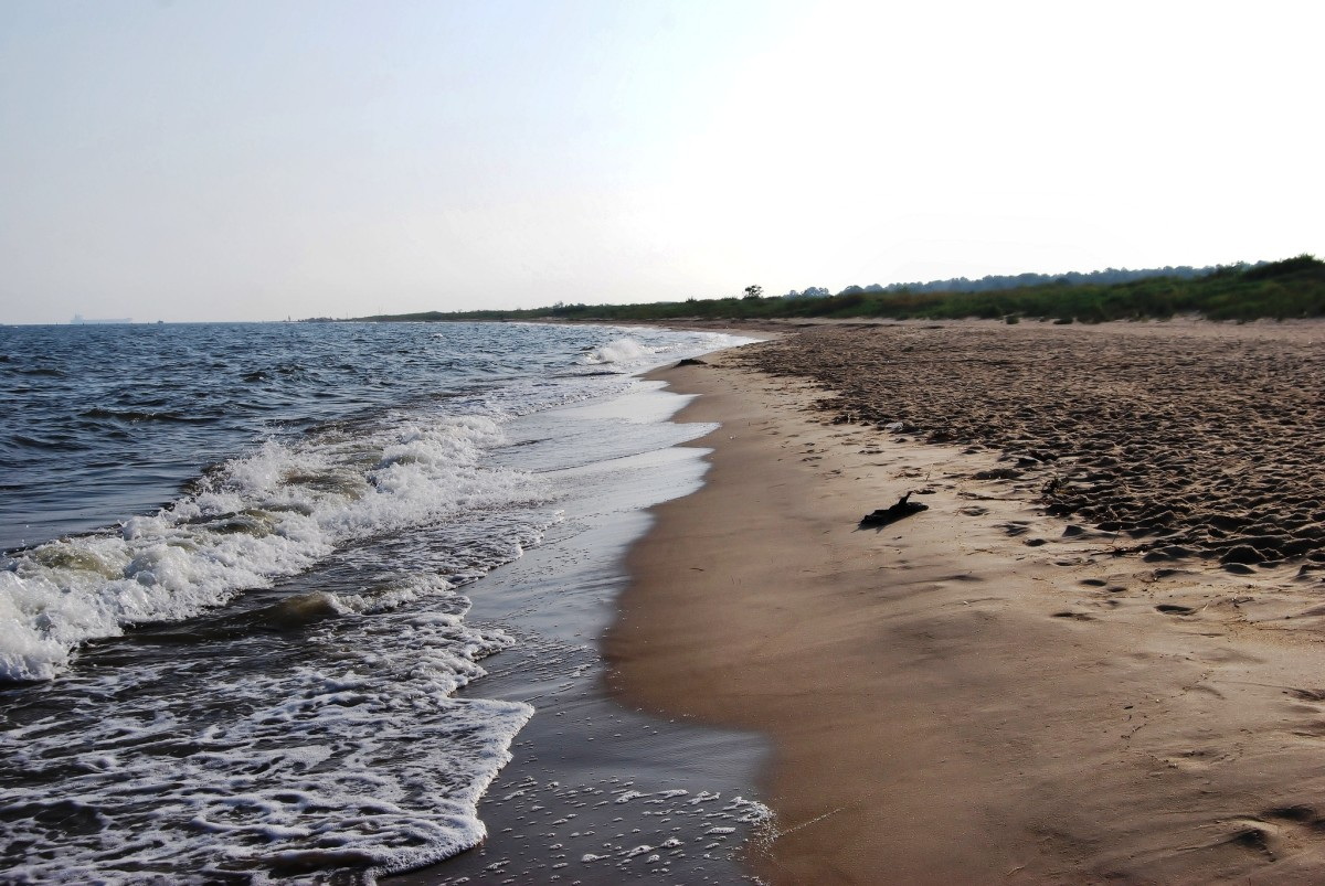 Shoreline at First Landing State Park in Virginia Beach, Virginia.