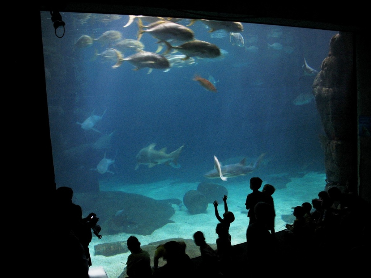 Virginia Aquarium & Marine Science Center in Virginia Beach, Virginia