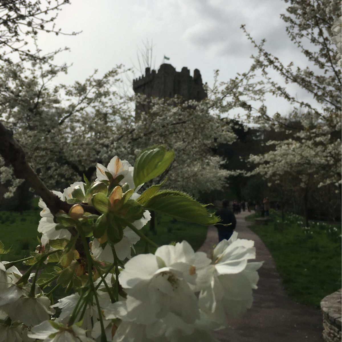 Blarney Castle—A difficult drive but well worth it.