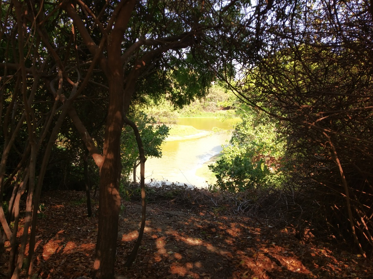 A view of Adyar creek through the trees.