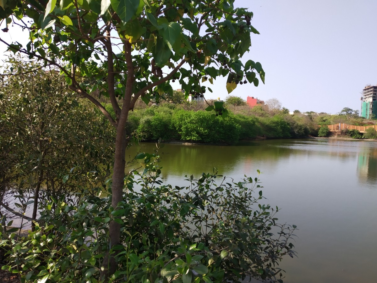 A view of Adyar creek.