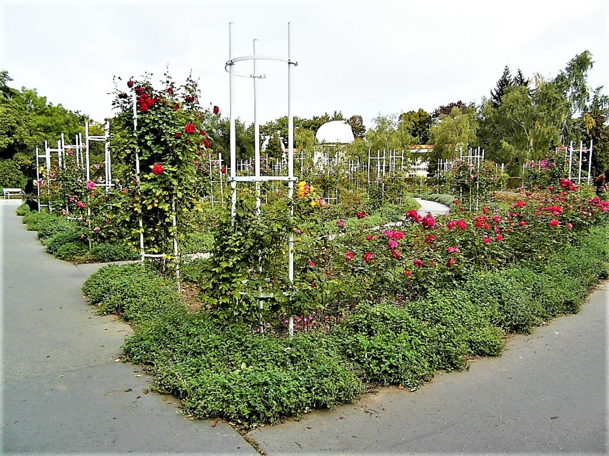 Rose garden in Petrin Park