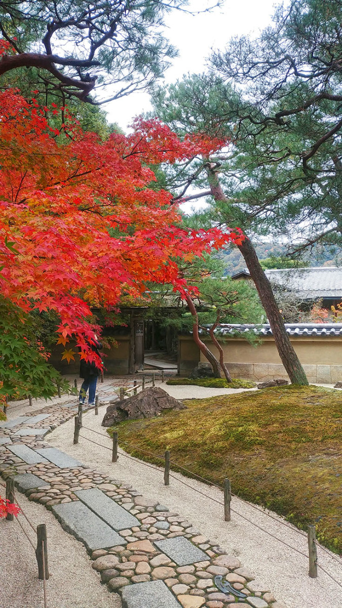 Blazing autumn leaves at the teahouse garden.