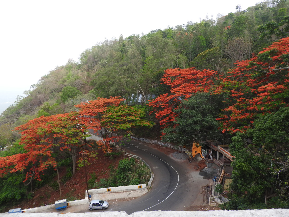 The Road to Yercaud