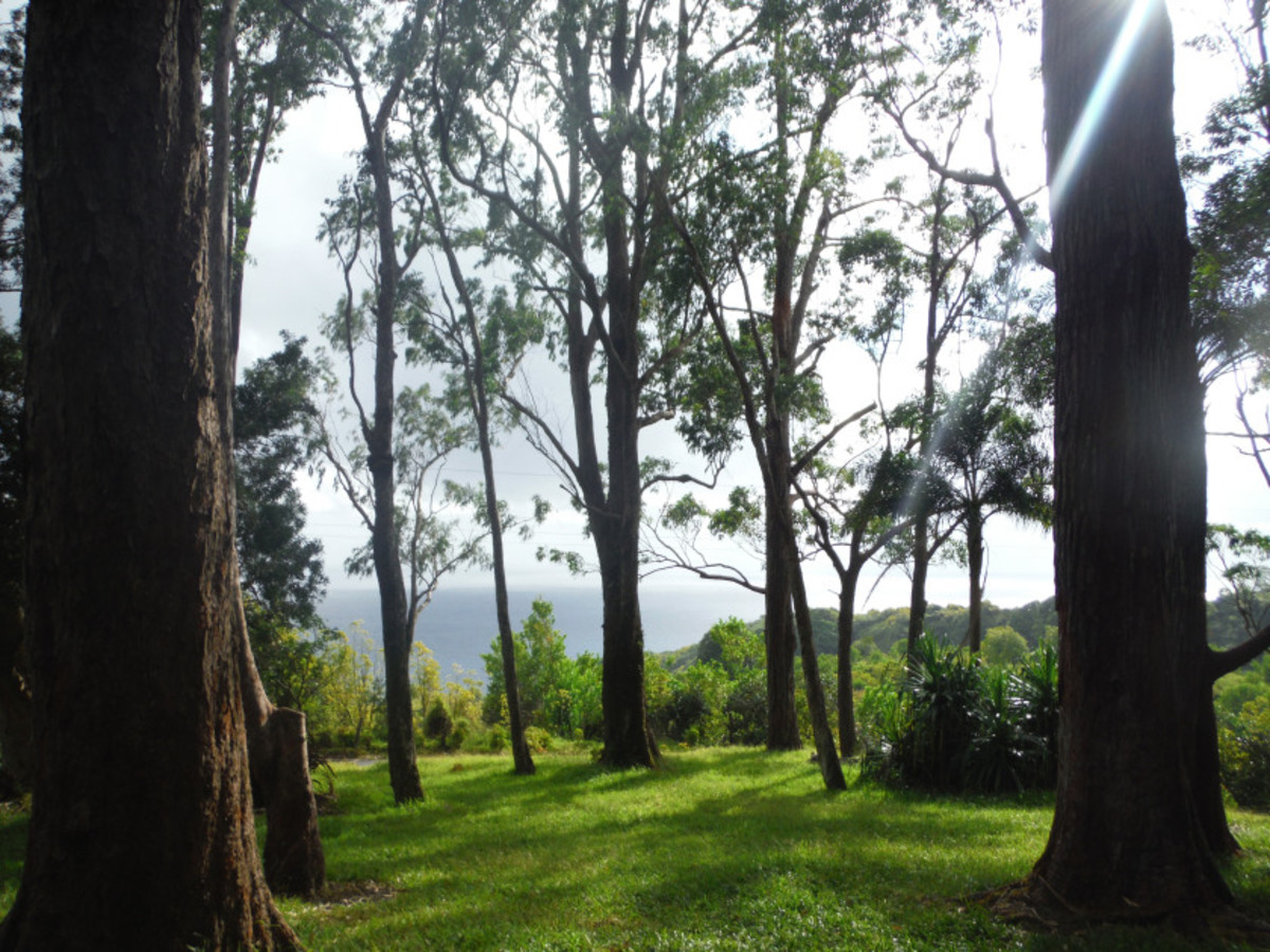 The best and most secluded ocean views on Maui can be seen along the Road to Hana