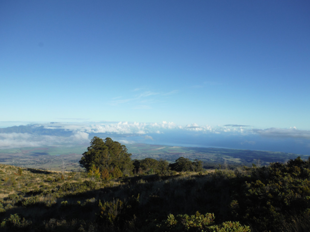 See horses, walk through lavender fields, and enjoy the breathtaking views in the Upcountry on Maui