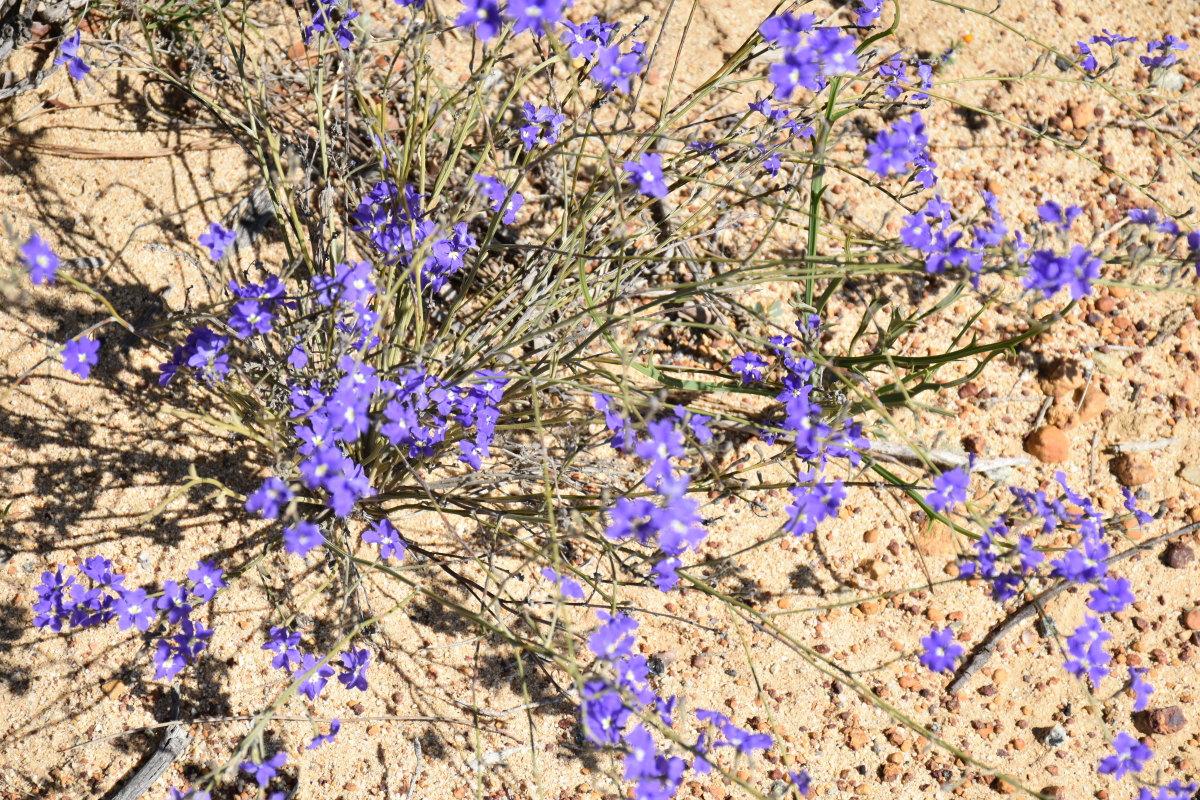 meandering-the-western-australian-wheatbelt