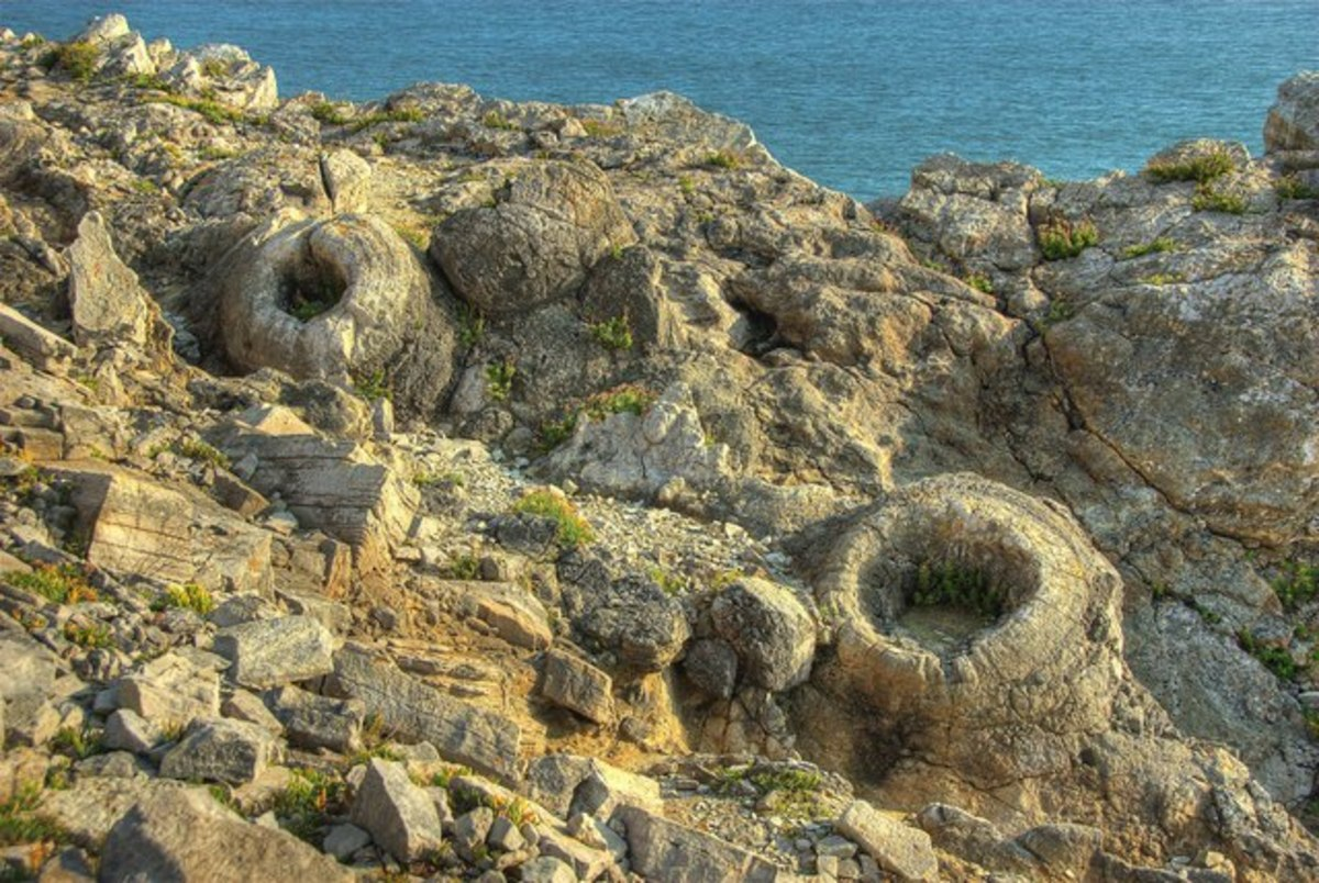 Fossil Forest, Dorset