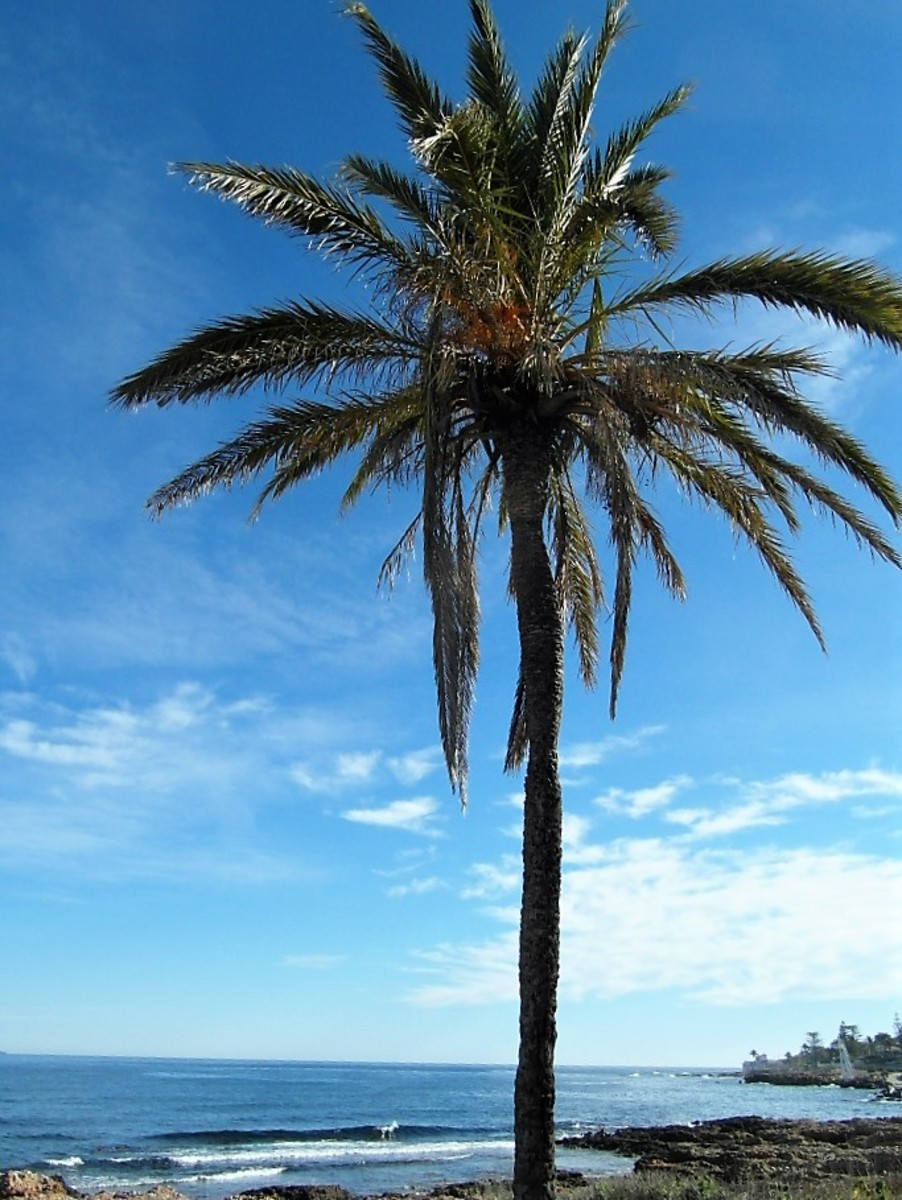 Typical Spanish coastal scene.